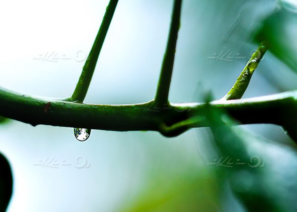 droplet on plant